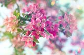 pic of leaked  - Blossoming cherry tree - JPG