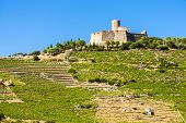picture of elm  - Saint Elme fortress - JPG