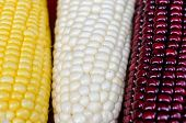 stock photo of corn cob close-up  - Photo cobs of corn lying on the table - JPG