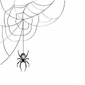 stock photo of venomous animals  - image of spider web isolated on white vector - JPG