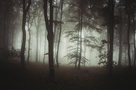 pic of scary haunted  - Dark moody haunted forest with fog and mysterious light - JPG