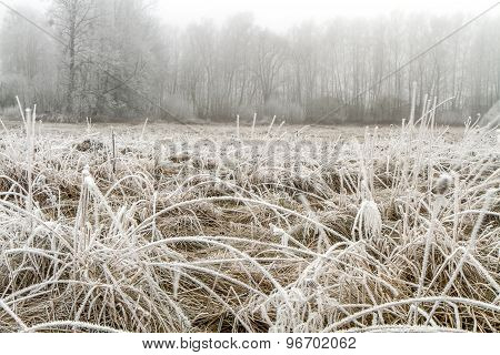 Ice-covered Fields Stagars
