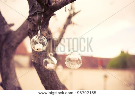Glass ball hanging in a tree