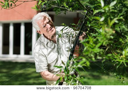 Horticulturist Cutting Tree Branch