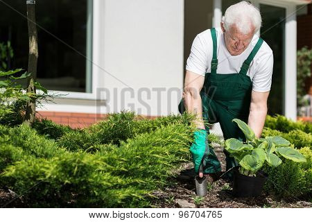 Senior Gardener Working