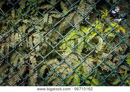 Steel Mesh Fence With Green Plant