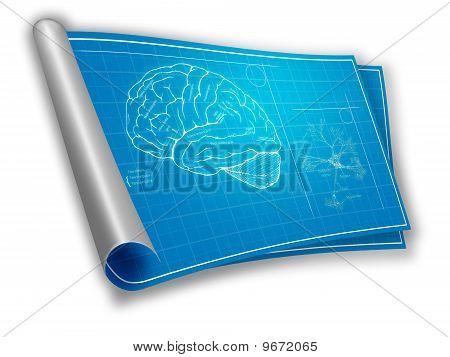 Blaupause von einem Gehirn