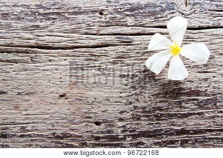 Plumeria Flower On Old Wood