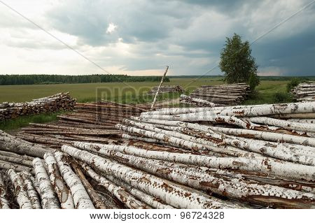 Trunks of trees cut and stacked