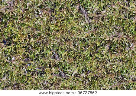 Green Moss. Seamless Tileable Texture.