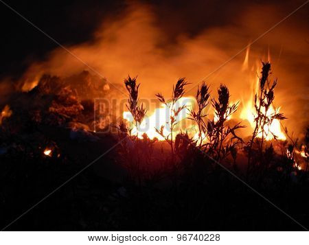 Grass spikes over burning fire
