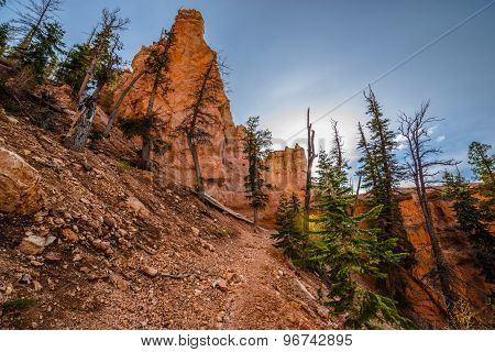 Ponderosa Trail Looking Up Bryce Canyon