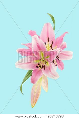 Close Up Of Pink Lilies Illustration