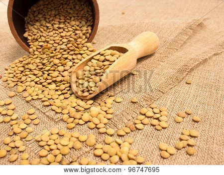 the seeds of green lentils on a canvas