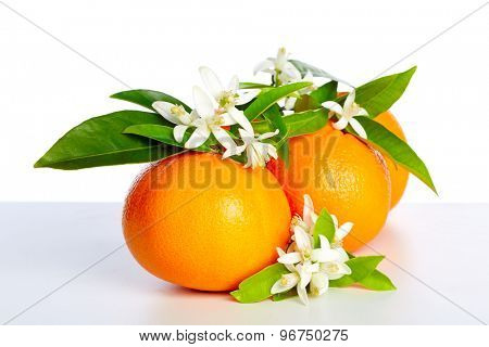 Oranges with orange blossom flowers in spring on white background