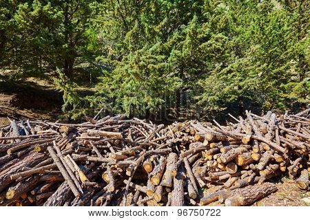 Firewood fire wook pattern texture in Spain forest