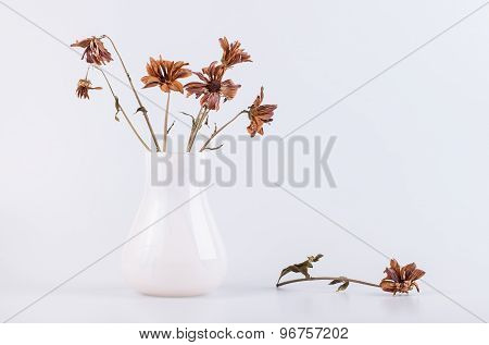 bouquet of dry flowers in a vase isolated on white