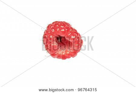 Ant inside raspberries