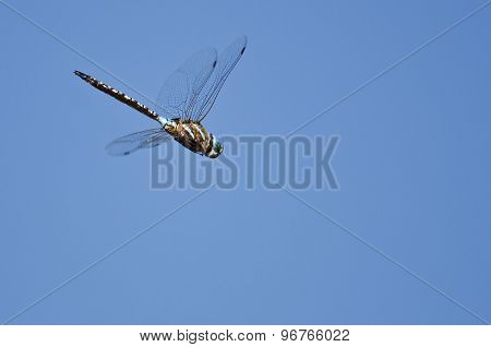 Dragonfly Hunting On The Wing In A Blue Sky