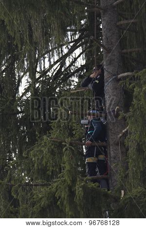 GARMISCH PARTENKIRCHEN, GERMANY. Feb 12 2011: Coaches strapped onto a tree to get a better watching position for the men's downhill at the 2011 Alpine skiing World Championships