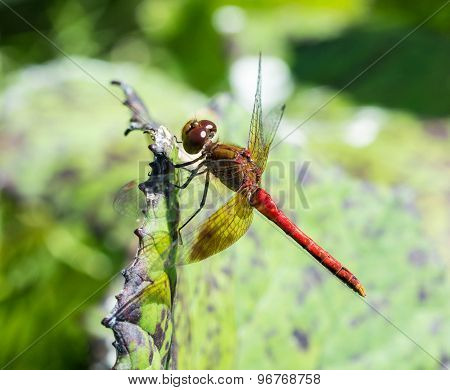 Dragonfly up close.
