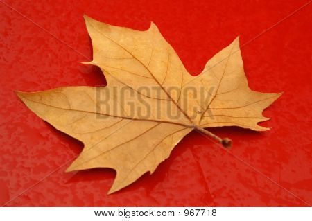 Autumn Leaf On Wet Red Surface