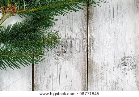 Fraiser Fir Branch On Rustic White Wooden Boards