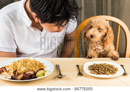 Puppy eyeing the plate of rice and meat on plate and show no interest on her plate of dried dog food