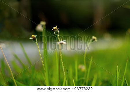 Small Flower With Green Blur Background