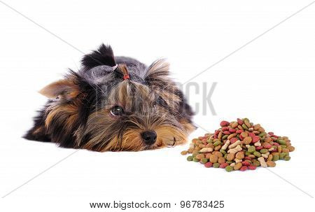 Yorkshire Terrier And Dog Food On White Background