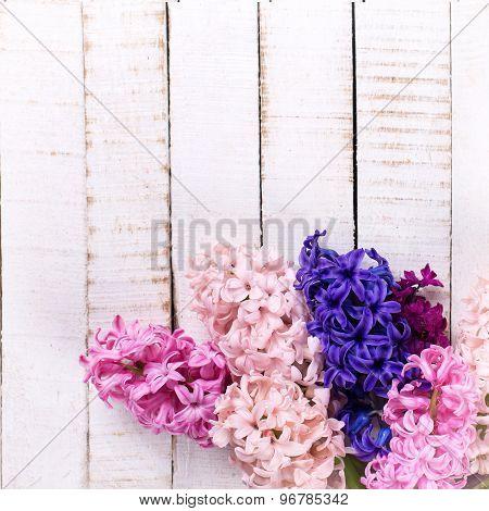Fresh Flowers Hyacinths