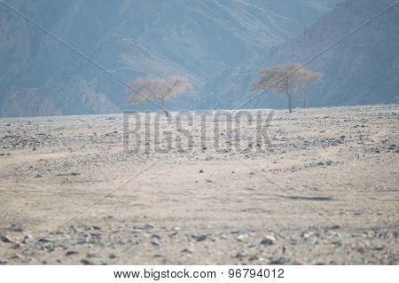 Three Trees In The Desert