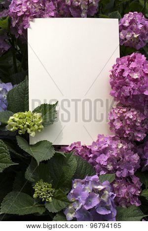 Paper Note In Hydrangea Flowers