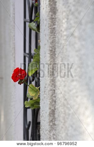 Red Flower In Grey Bare Wall