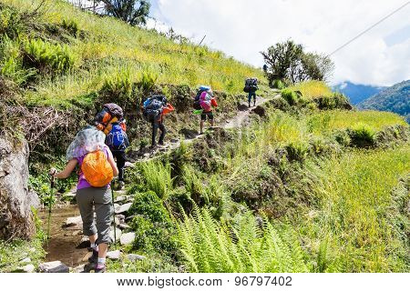 A group of people hiking through a scenic terrace plantation