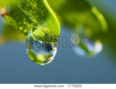 Dew Drop On Leaf