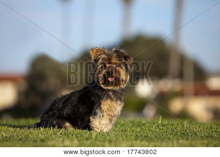Small puppy sitting on the grass