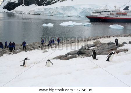 Tourists Photographing Gentoo Penguin