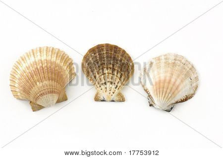 Beach objects. Shells isolated on white.