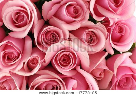 bunch of multiple pink roses background