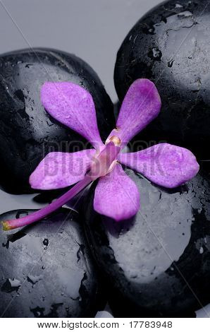 beauty orchid and stone with water drops