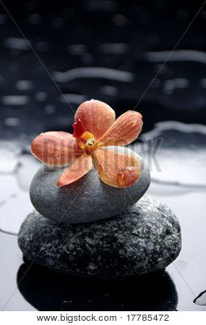 still life with orange flower