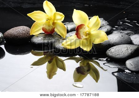 still life with orange orchid with water drops