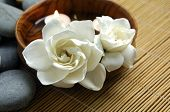 pic of white flower  - orchid flower and spa item - JPG