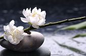 Stacked stones and white flower with petal on water drops
