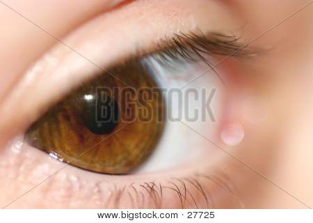 Brown Eye Macro