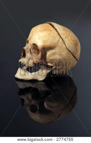 Real Skull
