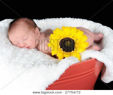 Sweet Newborn Sleeping Peacefully In A Container. Isolated