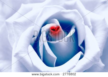 Blue Toned Rose With Heart Symbol In Center