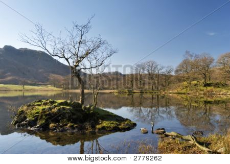 Árbol pequeño aislado en Rydal agua